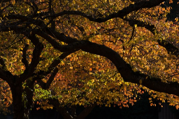 UW fall leaves