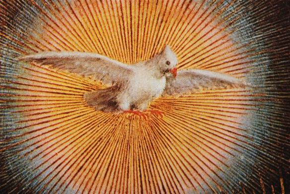 HS dove