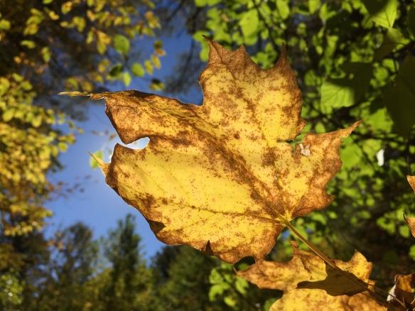 October leaf, Newfane, Vermont (Photo by Jim Friedrich)