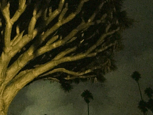 Dragon tree, Mount Calvary Monastery